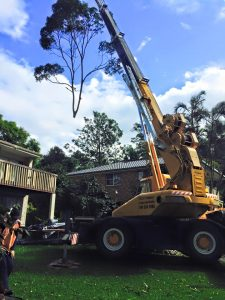 tree lopping crane